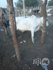 Cow Meat Beef For Sale | Livestock & Poultry for sale in Lagos State, Kosofe