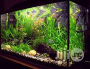 Aquarium Fish Tanks Designs And Installations | Fish for sale in Abuja (FCT) State, Garki 1