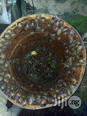 Snails For Sell | Other Animals for sale in Ogun State, Ado-Odo/Ota