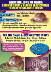 Breeding Snails ND Rearing Of Grasscutters | Pet Services for sale in Ogun State, Ayetoro