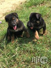 Full Breed German Shepherd Puppies | Dogs & Puppies for sale in Lagos State, Ikeja