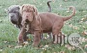 Neopolitan Mastiff Massive Quality and Full Breed   Dogs & Puppies for sale in Imo State, Owerri