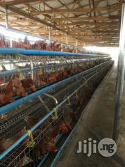 Layers Battery Cage For All Aspiring And Successful Farmers | Farm Machinery & Equipment for sale in Lagos State, Ikorodu