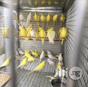 Lovely Birds Available For Sale | Birds for sale in Lagos State, Lekki Phase 1
