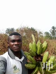 Farm And Ranch Manager CV | Farming & Veterinary CVs for sale in Osun State, Iwo
