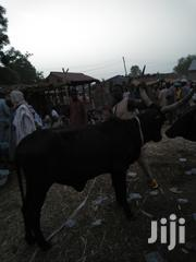 Big Black Cow | Livestock & Poultry for sale in Sokoto State, Sokoto North