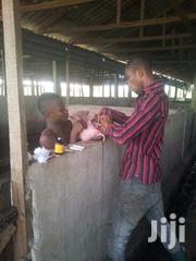 Veterinarian Job | Farming & Veterinary CVs for sale in Edo State, Oredo
