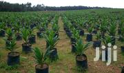 450 Acres With Palm Tree At Lagun Area Off Iwo/Ibadan | Land & Plots For Sale for sale in Oyo State, Egbeda