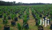 110 Acres With Palm Trees At Akanran Ibadan With C Of O | Land & Plots For Sale for sale in Oyo State, Egbeda