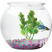Hawkeye Fish Bowl - Xtra Large | Pet's Accessories for sale in Lagos State, Lagos Mainland