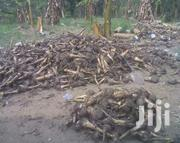 Plantain Suckers | Feeds, Supplements & Seeds for sale in Oyo State, Ibadan North
