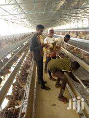 Poultry Hands And Live-in Poultry Staff | Farming & Veterinary CVs for sale in Abuja (FCT) State, Dei-Dei