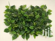 Get Affordable Wall Plant At Low Prices | Garden for sale in Benue State, Makurdi