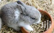 Rabbit Feed Pellet For Sale | Livestock & Poultry for sale in Lagos State, Alimosho