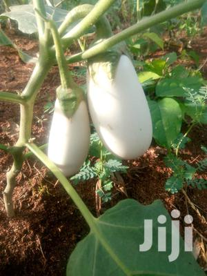 White Eggplant Seedlings And Seed For Sale