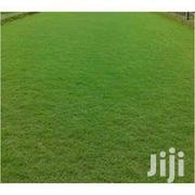 Plant 1000sqm Of Grass And Get 100sqm Free | Garden for sale in Oyo State, Ibadan