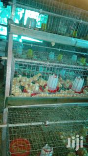 Rearing Auto Battery Cage | Farm Machinery & Equipment for sale in Oyo State, Ido