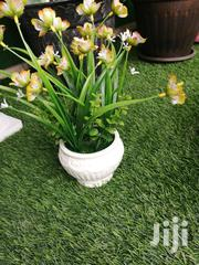 Potted Flowers For Decoration Of Interiors Designing | Landscaping & Gardening Services for sale in Abia State, Aba South