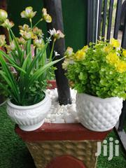 Mini Potted Flowers For Sale | Landscaping & Gardening Services for sale in Akwa Ibom State, Ikot Ekpene