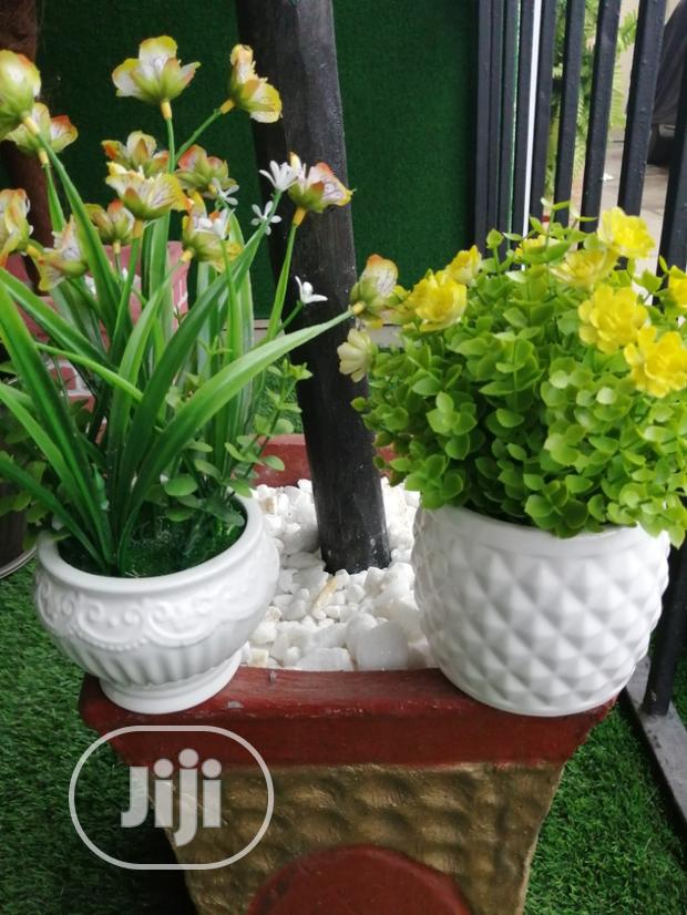 Mini Potted Flowers For Sale
