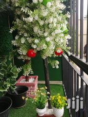 Affordable Beautiful Mini Potted Flowers For Sale   Landscaping & Gardening Services for sale in Anambra State, Onitsha