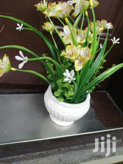 Beautiful Potted Flowers At Sales Nationwide,Order Now | Garden for sale in Benue State, Katsina-Ala