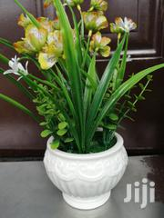 Beautiful Potted Flowers At Sales Nationwide,Order Yours Today | Garden for sale in Benue State, Makurdi