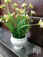 Get Affordable Beautiful Potted Flower As A Bulk Buyer Nationwide | Landscaping & Gardening Services for sale in Ebonyi State, Abakaliki