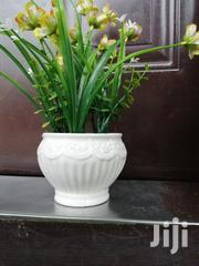 Get Affordable Beautiful Potted Flower As A Bulk Buyer Nationally | Landscaping & Gardening Services for sale in Ebonyi State, Onicha