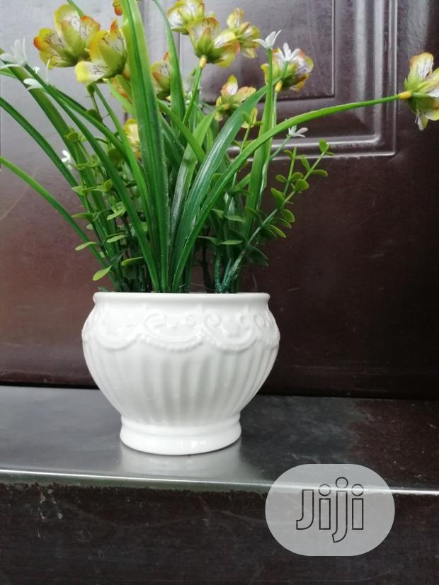 Get Affordable Beautiful Potted Flower As A Bulk Buyer Nationally