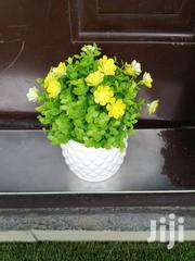 Get Affordable Beautiful Potted Flowers At Wholesale Prices | Landscaping & Gardening Services for sale in Edo State, Egor