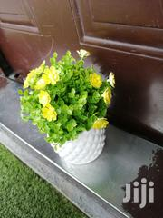 Get Affordable Beautiful Potted Flowers At Retail Prices | Landscaping & Gardening Services for sale in Ekiti State, Ado Ekiti