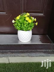 Get Your Beautiful Potted Flowers At Affordable Prices | Landscaping & Gardening Services for sale in Gombe State, Gombe LGA