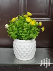 Small Potted Flowers For Decorating Of Home And Office At Sales | Landscaping & Gardening Services for sale in Imo State, Owerri-Municipal