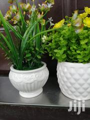 Small Beautiful Potted Flowers For Sale Nationwide | Landscaping & Gardening Services for sale in Kebbi State, Koko/Besse