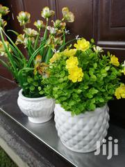 Beautiful Potted Flowers For Sale At Affordable Prices | Landscaping & Gardening Services for sale in Kogi State, Lokoja