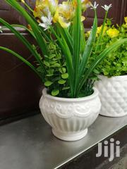 Get Beautiful Potted Mini Flowers At Affordable Prices | Landscaping & Gardening Services for sale in Nasarawa State, Karu-Nasarawa