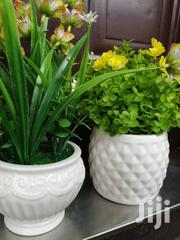 Beautiful Potted Small Flowers At Best Low Prices,Order Yours Now | Landscaping & Gardening Services for sale in Niger State, Bosso