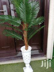 Quality Beautiful Tree Plant For Sale Nationwide | Garden for sale in Lagos State, Orile