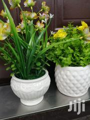 Get Quality Potted Cup Flowers At Affordable Prices | Landscaping & Gardening Services for sale in Ogun State, Abeokuta South