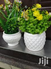 Quality Mini Potted Beautiful Flowers | Landscaping & Gardening Services for sale in Osun State, Osogbo