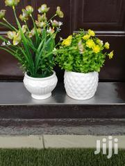 Beautiful Small Potted Flowers For Sale To Re-sellers At Best Prices | Landscaping & Gardening Services for sale in Plateau State, Jos