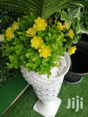 Get Affordable Mini Potted Flowers Nationwide | Landscaping & Gardening Services for sale in Sokoto State, Dange-Shuni