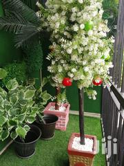 Order For Your Beautiful Tree Plants As A Bulk Buyer | Garden for sale in Abia State, Umuahia