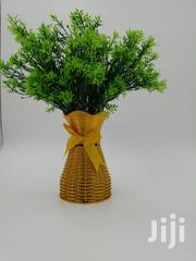Get Affordable Flower Plant At Wholesale Price | Garden for sale in Lagos State, Agege