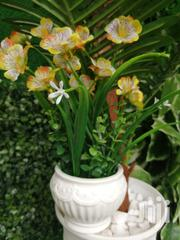 Quality Potted Mini Beautiful Flowers For Sales   Landscaping & Gardening Services for sale in Yobe State, Damaturu