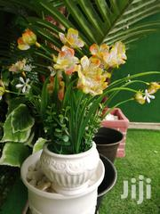 Affordable Quality Potter Beautiful Flowers At Sales   Landscaping & Gardening Services for sale in Yobe State, Yusufari