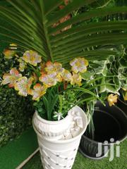 Get Durable Potted Mini Flowers At Affordable Prices | Landscaping & Gardening Services for sale in Zamfara State, Maradun