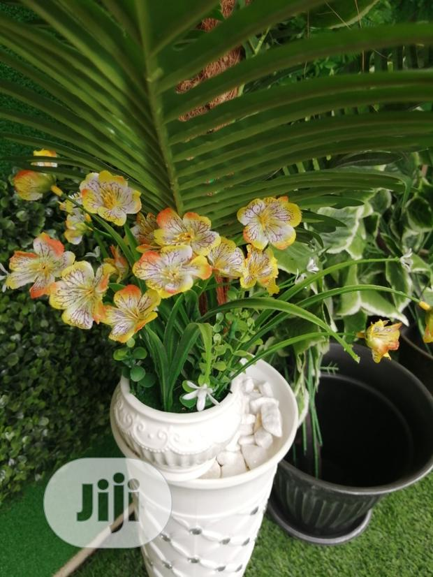 Get Durable Potted Mini Flowers At Affordable Prices