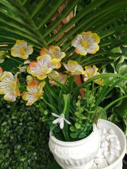 Get Durable Beautiful Flowers At Affordable Prices | Landscaping & Gardening Services for sale in Abia State, Aba South